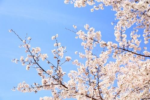 一般的には春先がおすすめ